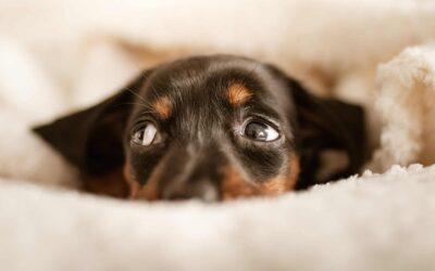 Jakie legowisko dla psa? O czym należy pamiętać przed jego zakupem?