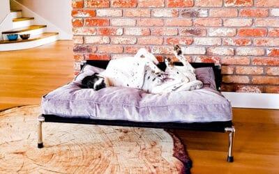 Buda czy legowisko dla psa?