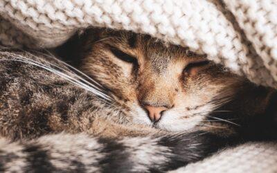 Czy kot potrzebuje legowiska?